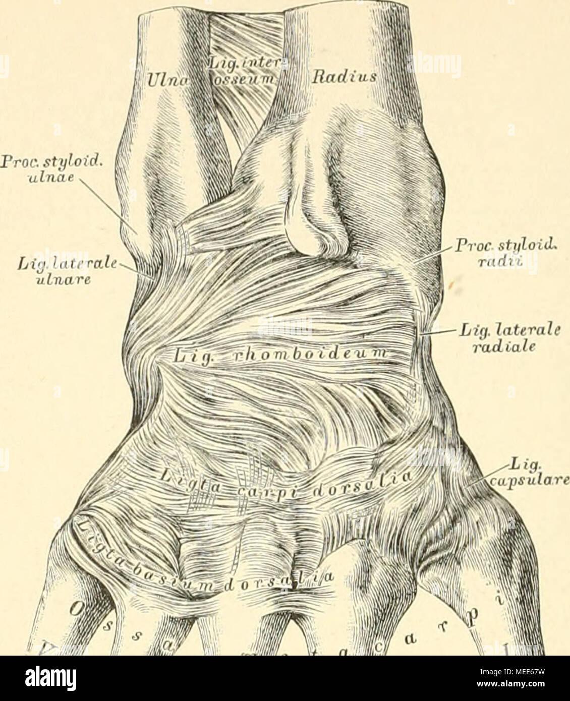 Die descrittivo topographische und anatomie des Menschen . Hf /*§ H ...