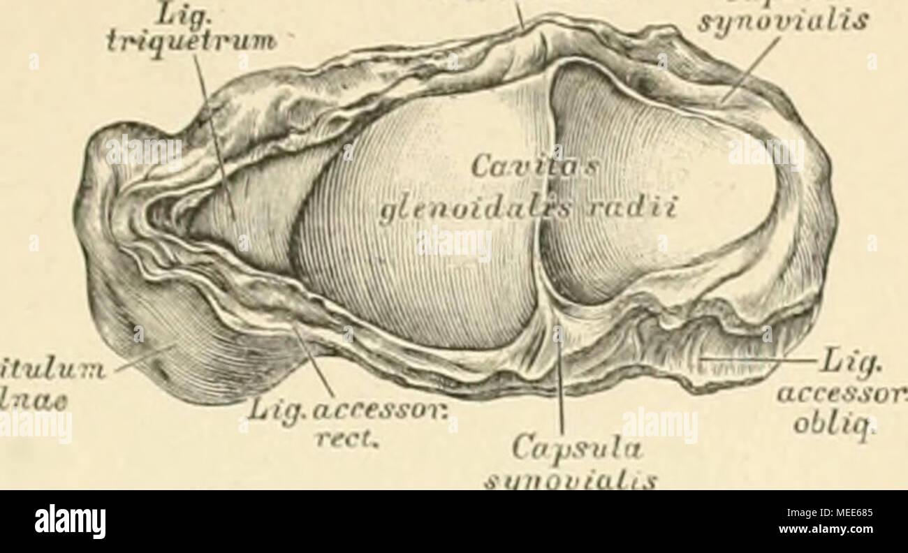 Tolle Muskeln Des Weichen Gaumens Anatomie Galerie - Anatomie Von ...