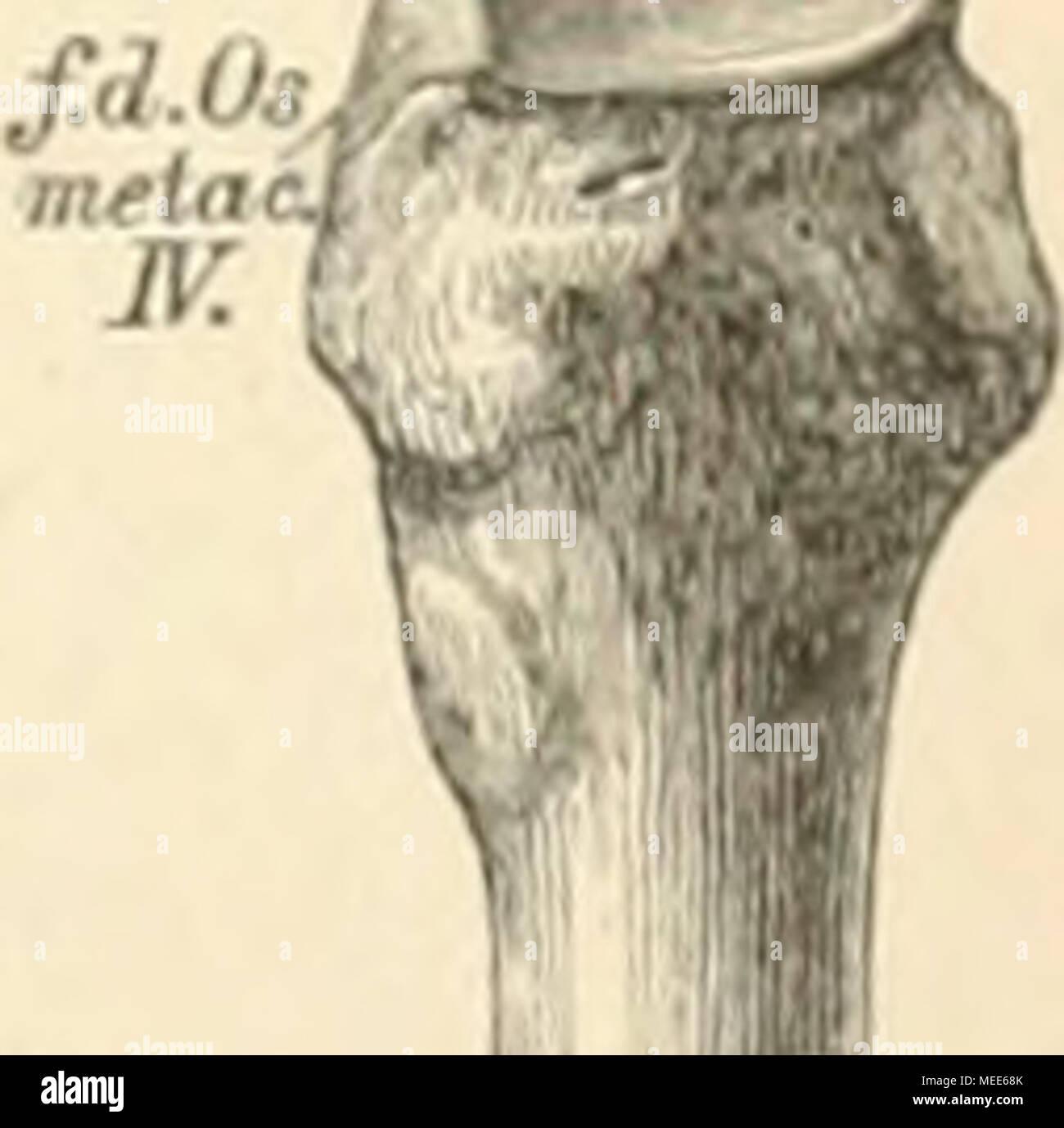 Ungewöhnlich Radialknochenanatomie Bilder - Anatomie Von ...