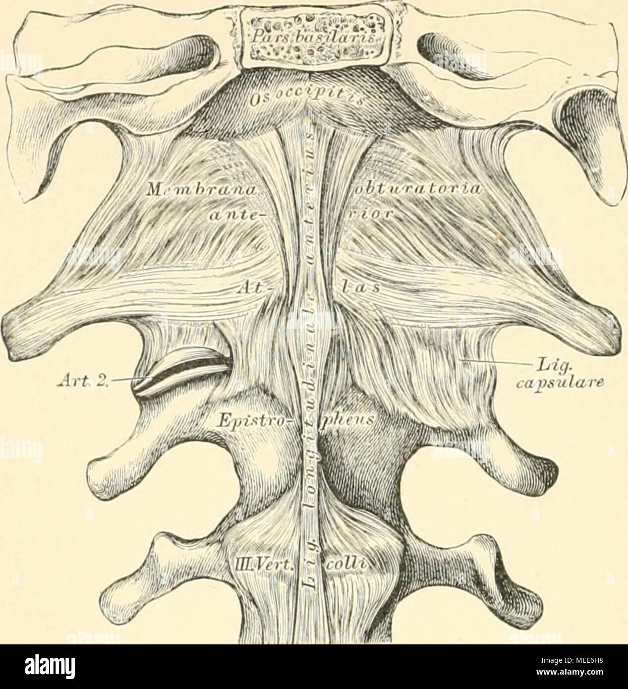 Die descrittivo topographische und anatomie des Menschen . 95. Das ...