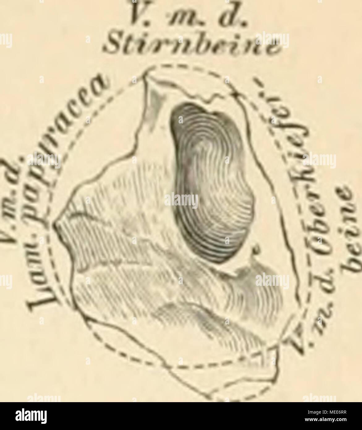 Wunderbar Atlas Und Dissektion Führung Für Vergleichende Anatomie ...