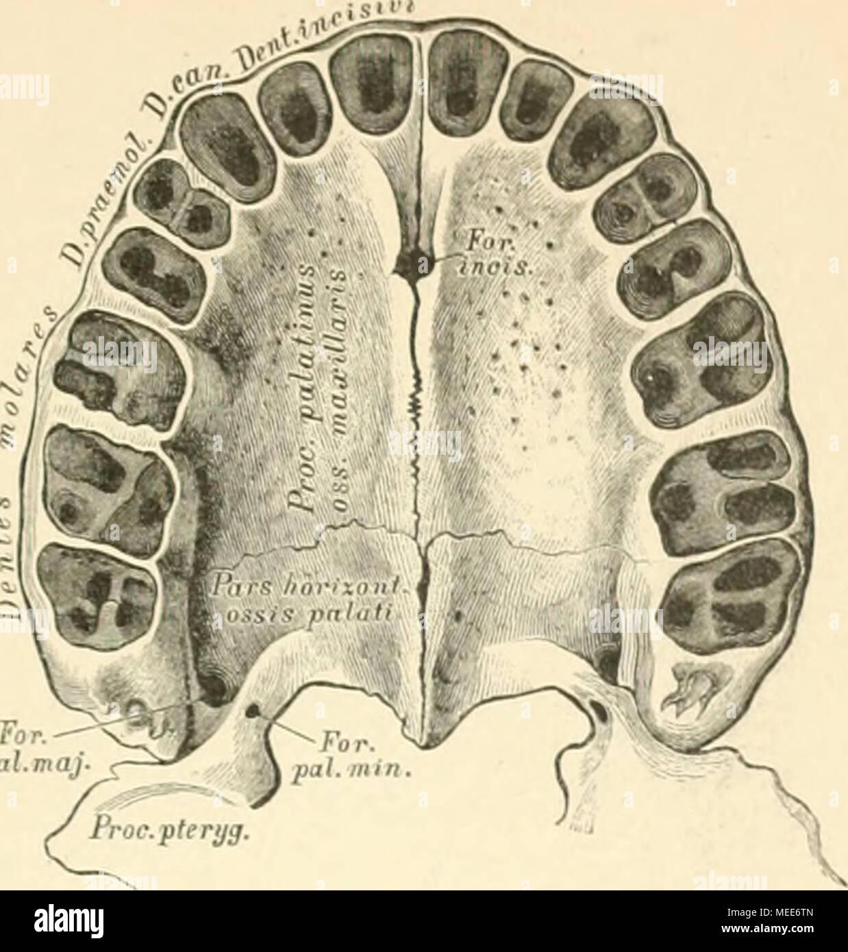 Ziemlich Menschliche Anatomie Linke Seite Zeitgenössisch - Anatomie ...