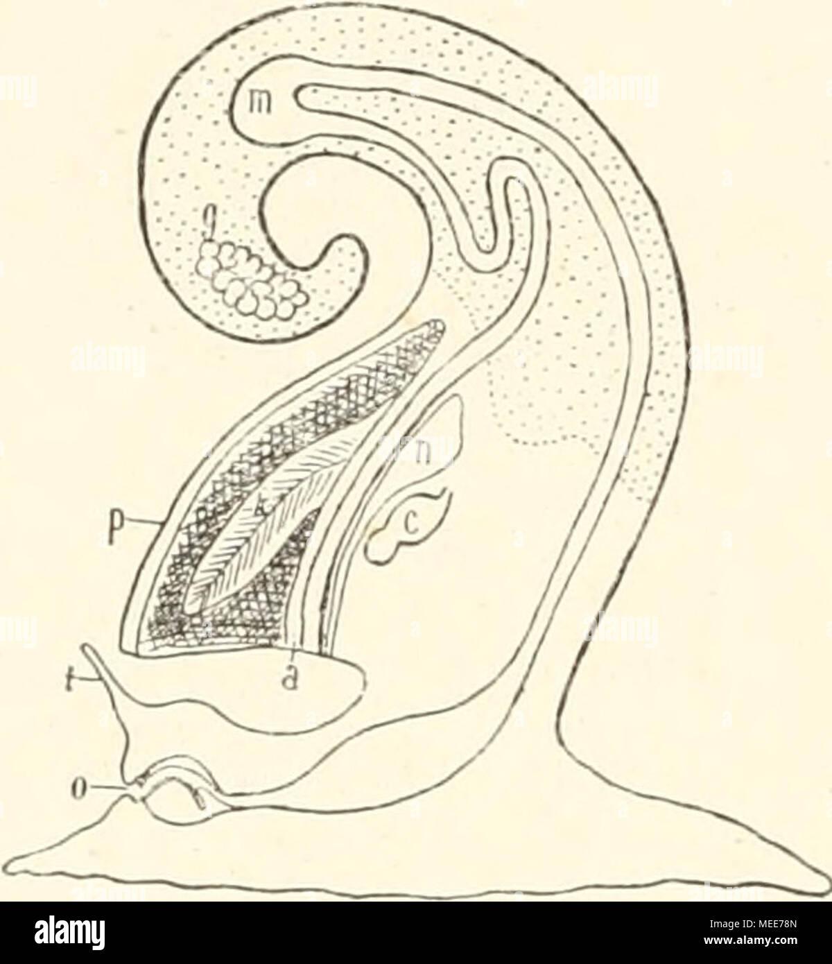Ziemlich Oberflächenanatomie Begriffe Ideen - Menschliche Anatomie ...