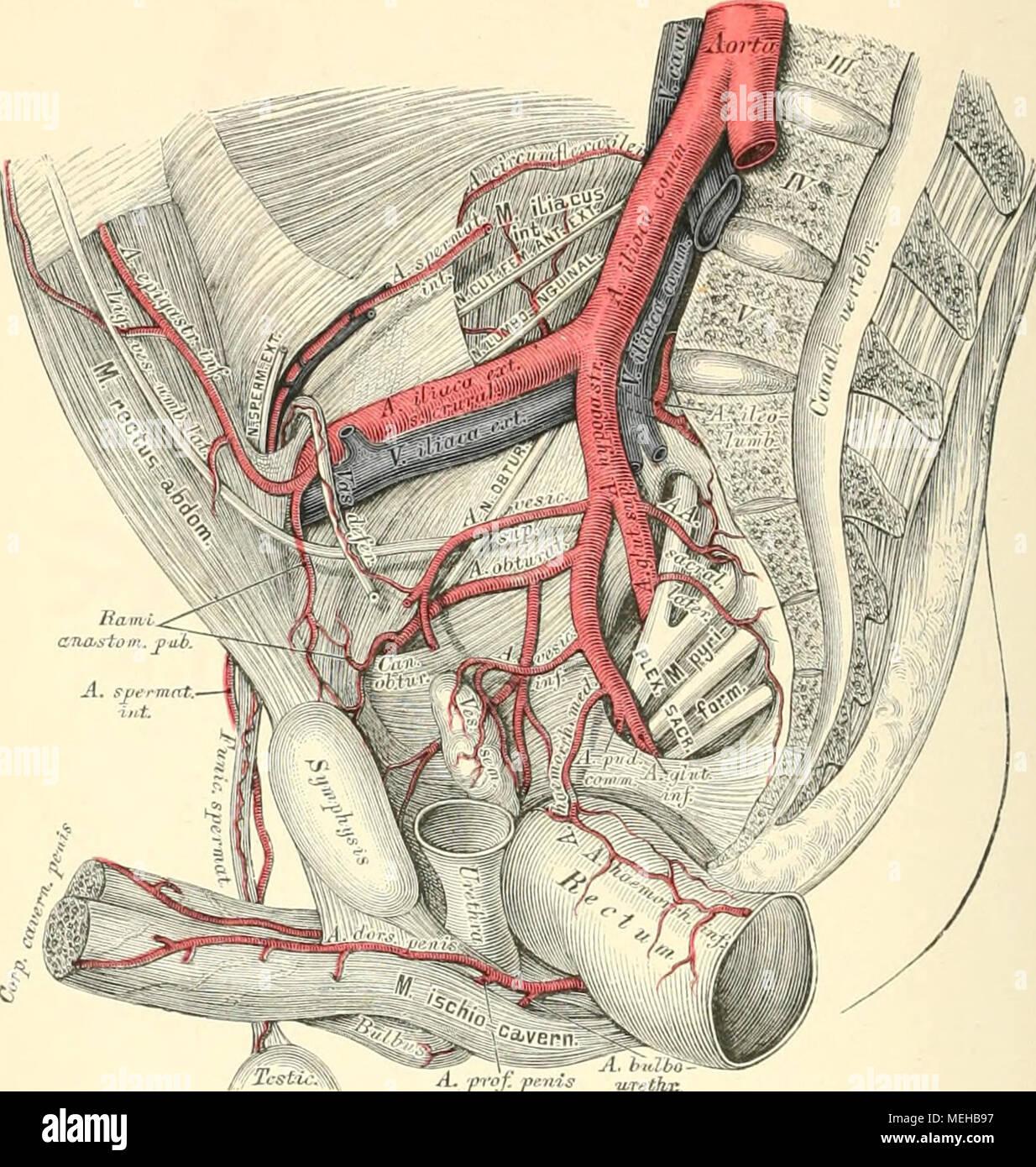 Die descrittivo topographische und anatomie des Menschen . A.r-r<\