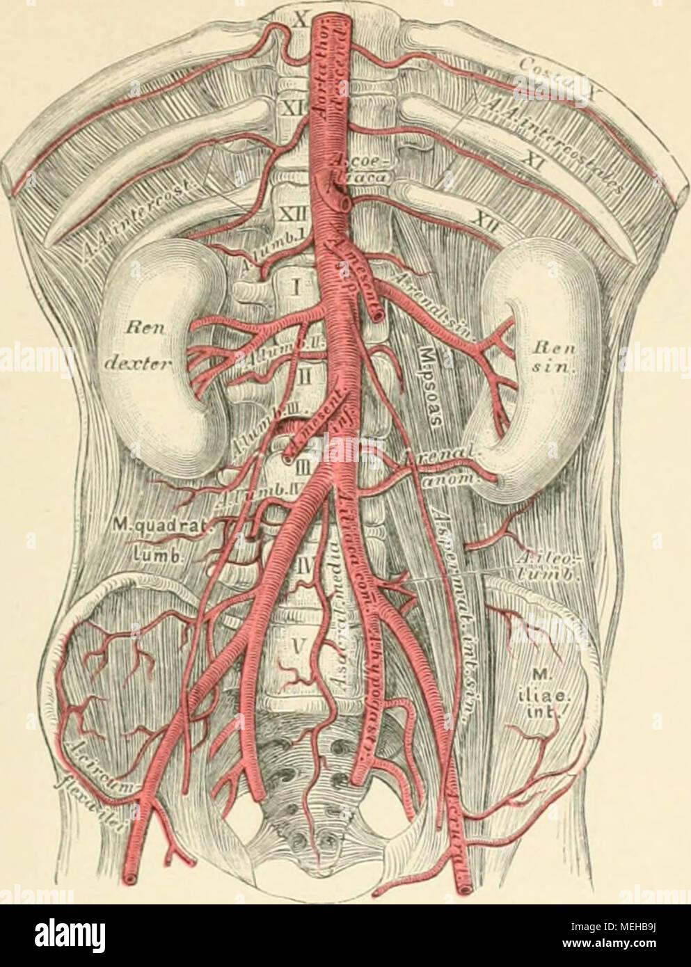 Die descrittivo topographische und anatomie des Menschen . 734 ...