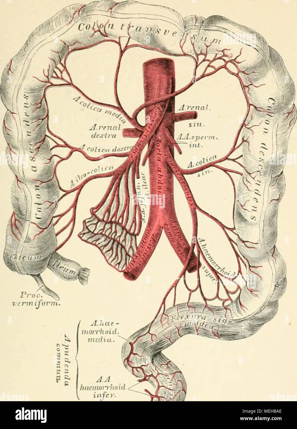 Großzügig Pankreasgang Anatomie Galerie - Menschliche Anatomie ...