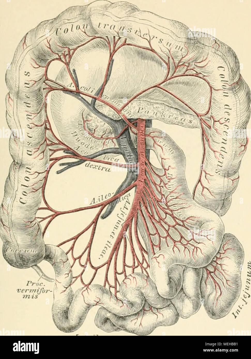 Atemberaubend Kniekehlenvene Anatomie Fotos - Menschliche Anatomie ...