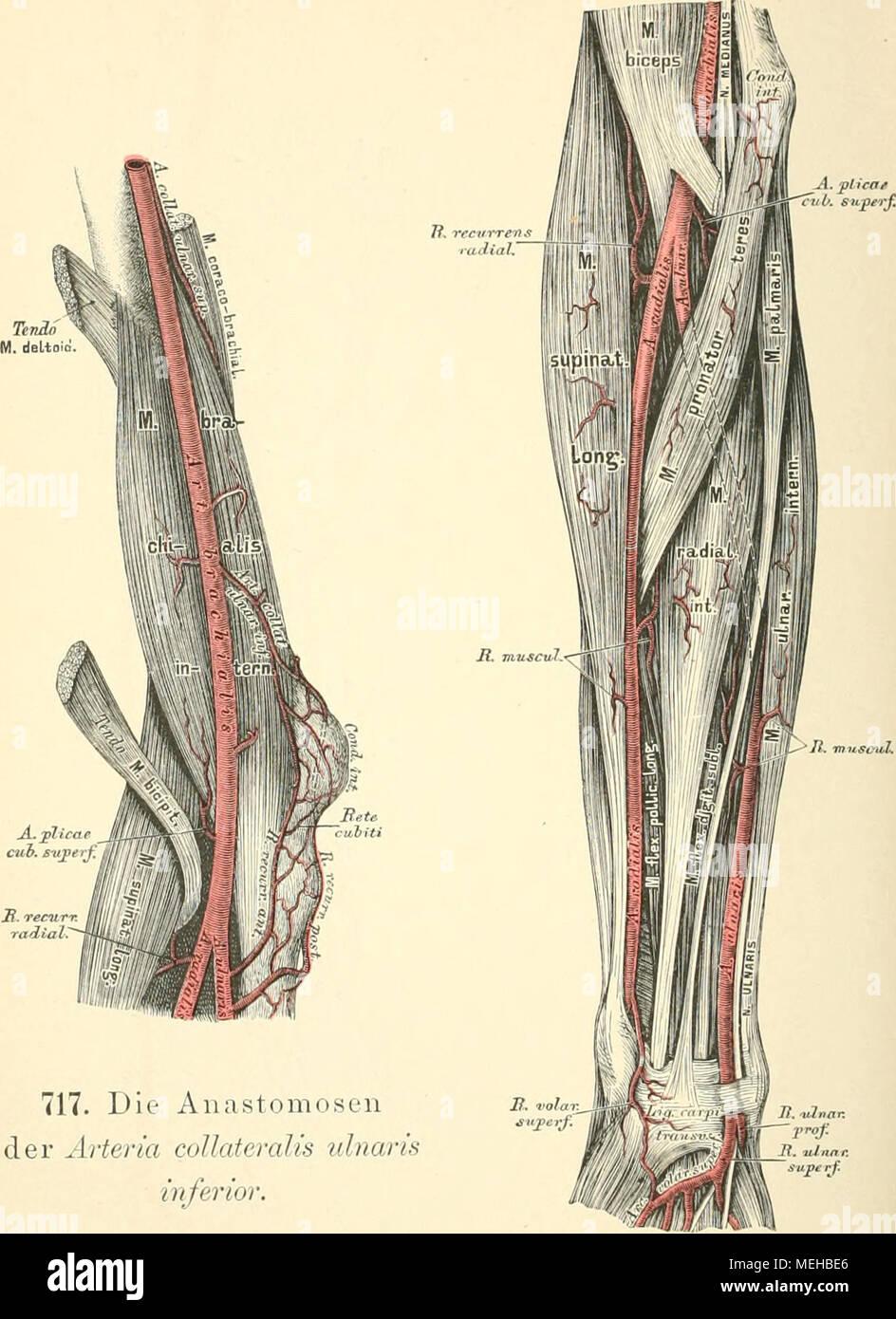 Ausgezeichnet Arm Gefäßanatomie Fotos - Menschliche Anatomie Bilder ...