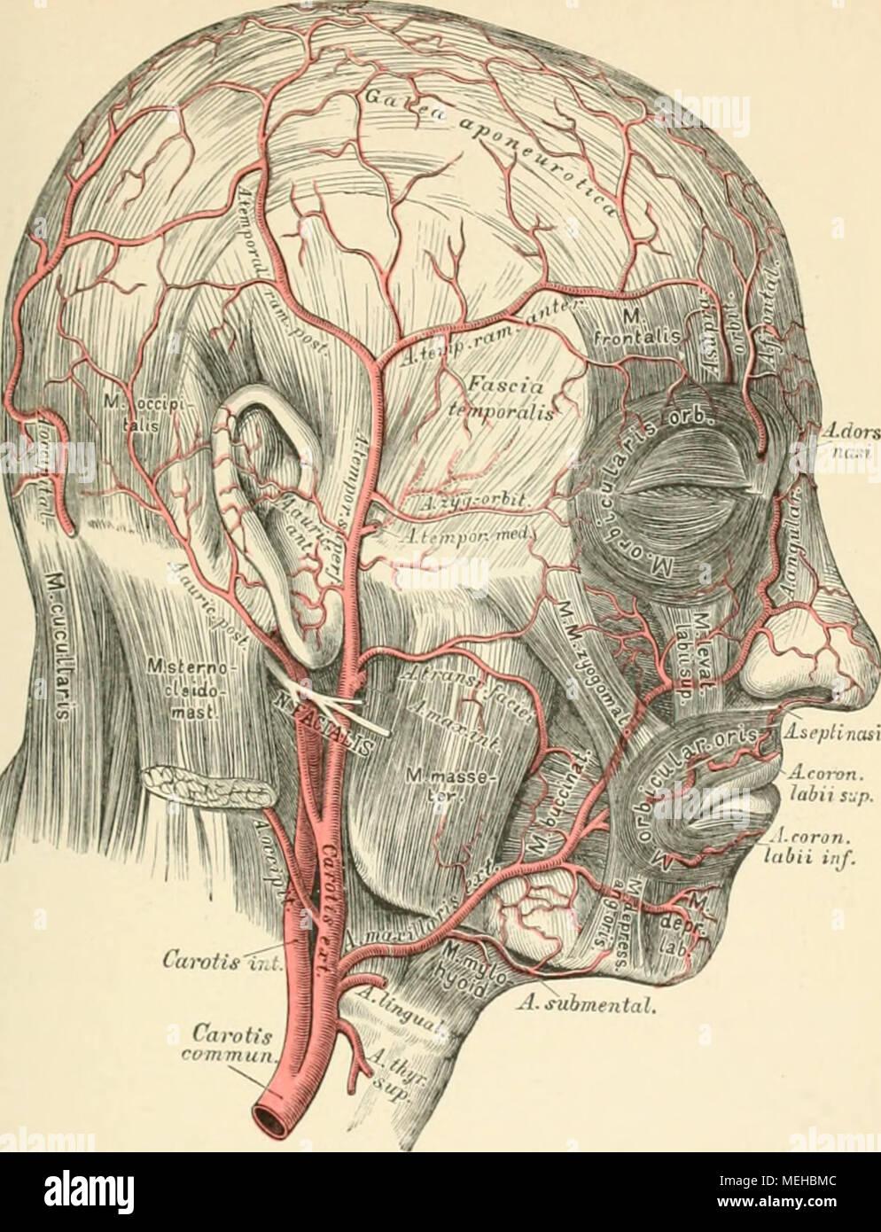 Atemberaubend Kenneth Saladin Anatomie Und Physiologie 7. Auflage ...