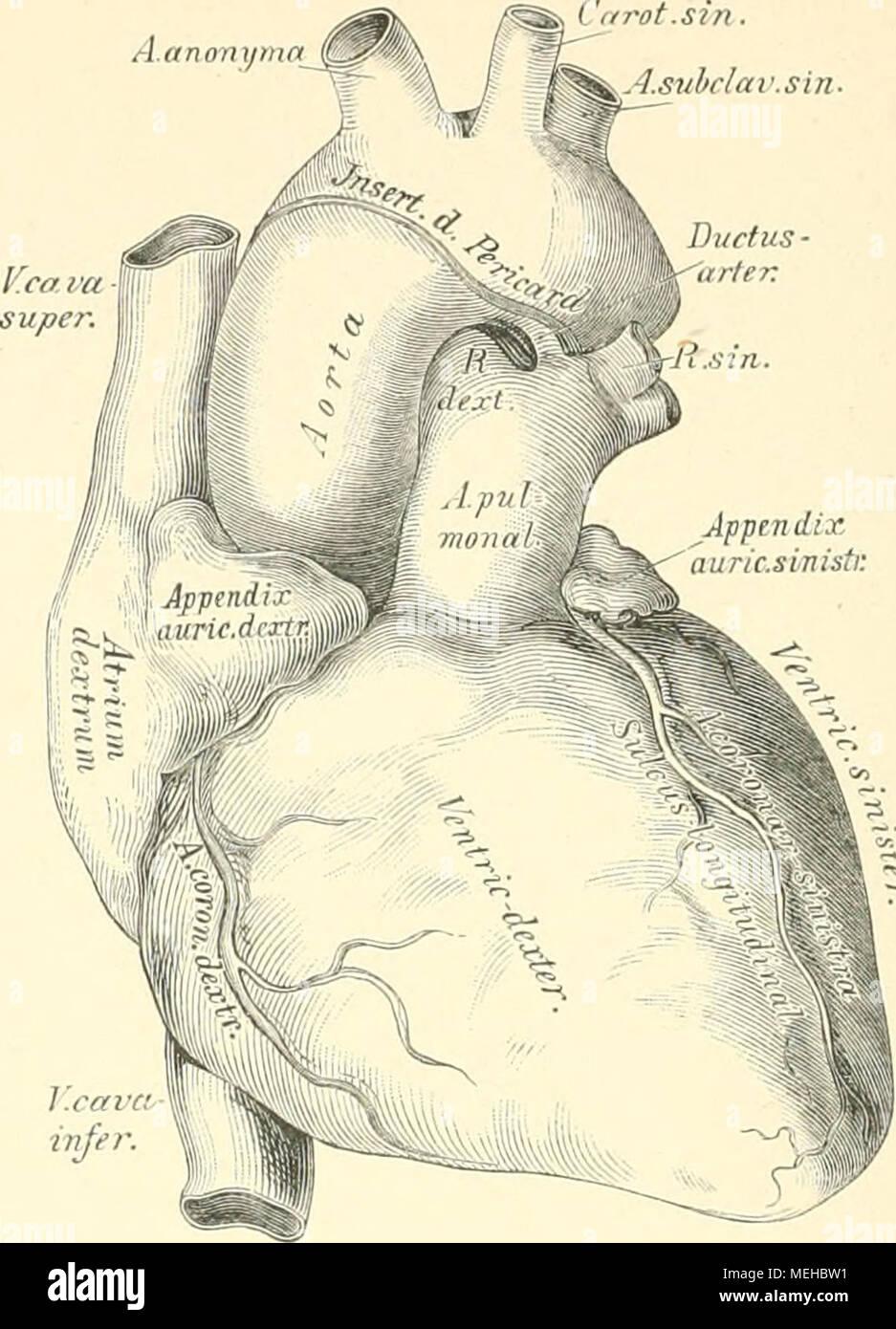 Großartig Anatomie Obere Rückenmuskulatur Zeitgenössisch ...