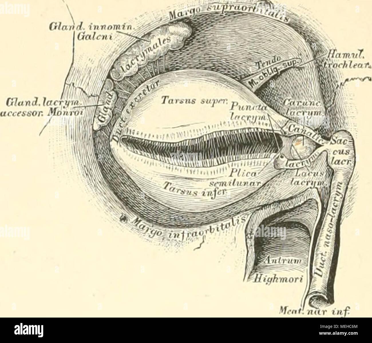 Großartig Räder Zahn Anatomie Physiologie Und 10. Ausgabe Okklusion ...