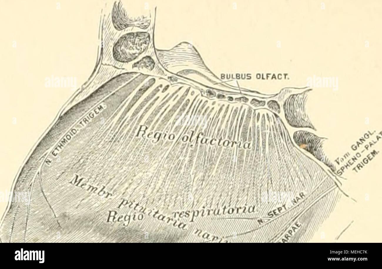 Die descrittivo topographische und anatomie des Menschen . 624. Die ...