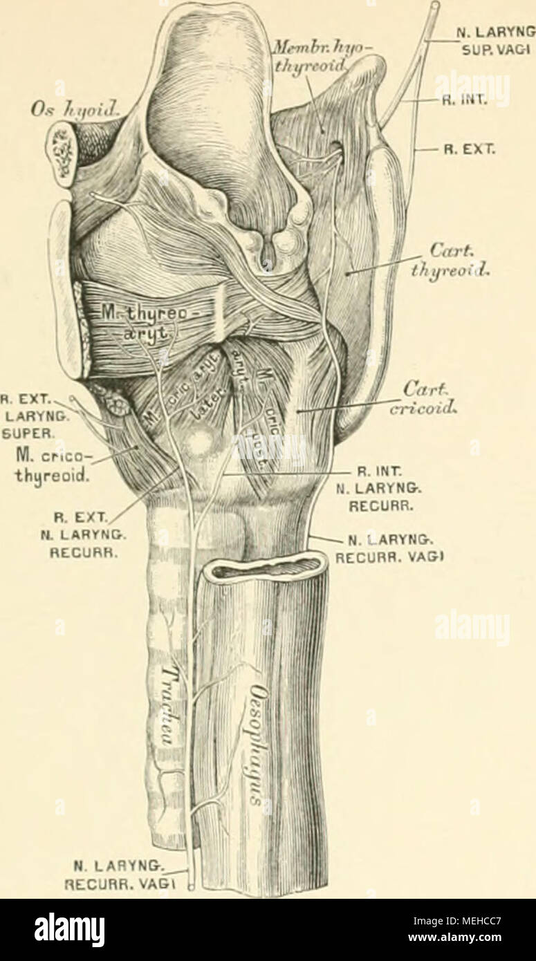 Ausgezeichnet Menschliche Anatomie Nachrichten Artikel ...