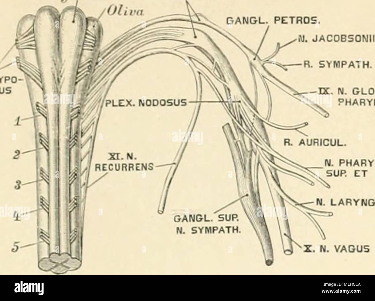 Fein Ausgabe Martini Anatomie Und Physiologie 9. Fotos - Menschliche ...
