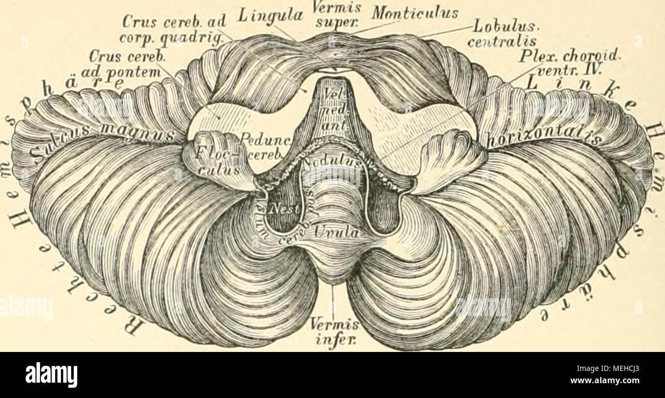 Wunderbar Mandeln Anatomie Und Physiologie Fotos - Physiologie Von ...