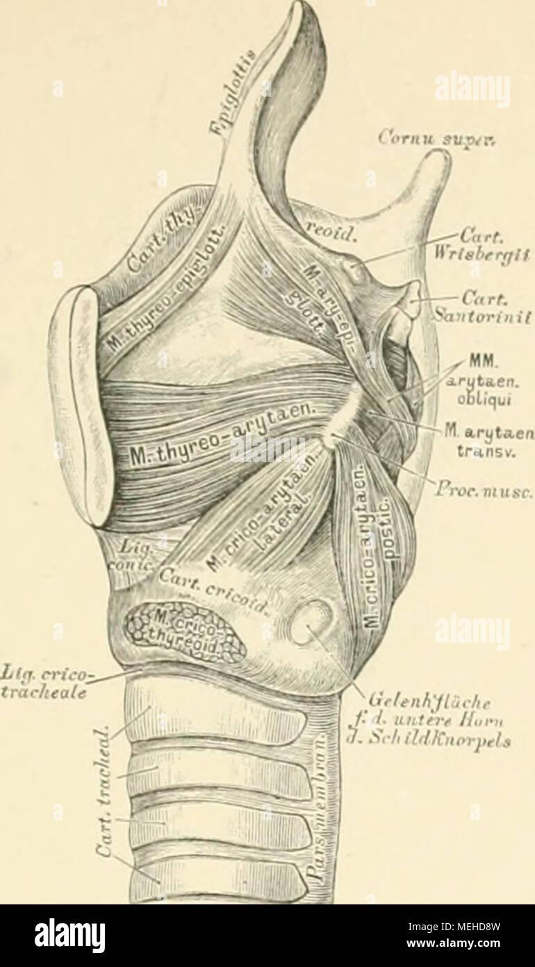 Die descrittivo topographische und anatomie des Menschen . 425 ...