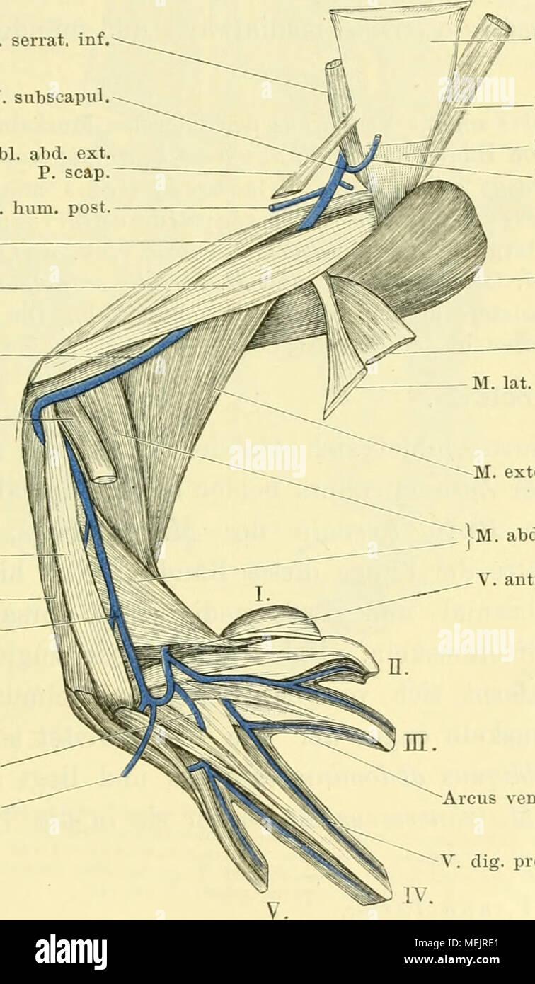 Tolle Anatomie Bild Des Bauches Bilder - Menschliche Anatomie Bilder ...