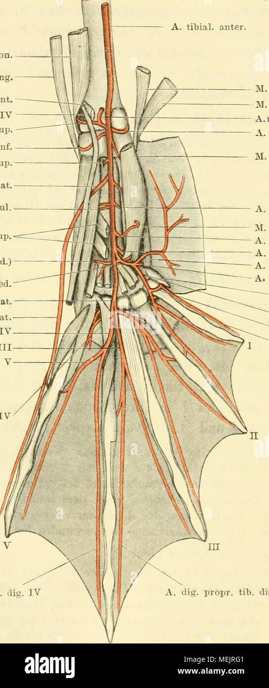 Erfreut Anatomie Und Physiologie Ein Integrativer Ansatz Verbinden ...