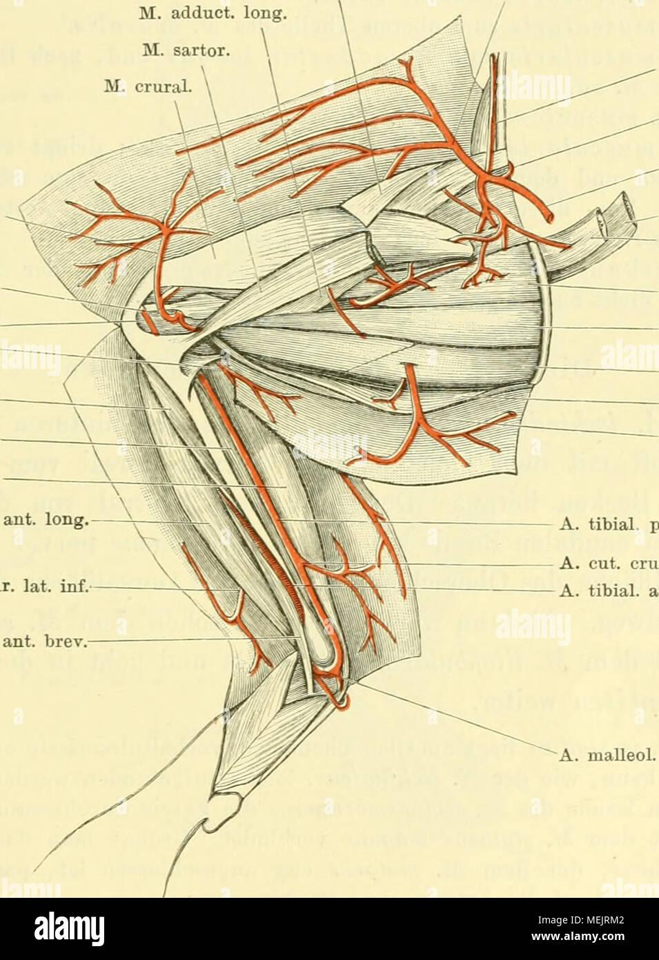Ungewöhnlich Definition Der Beugung In Der Anatomie Bilder ...