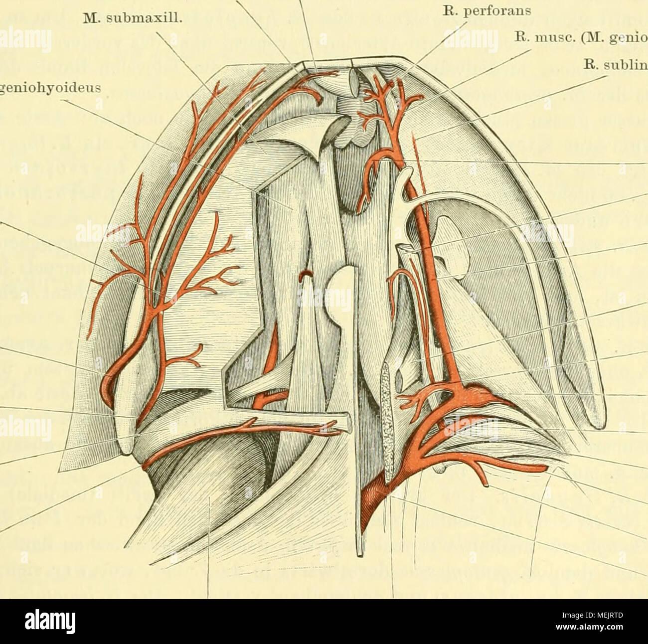 Großartig Anatomie Begriffe Und Definitionen Galerie - Anatomie ...