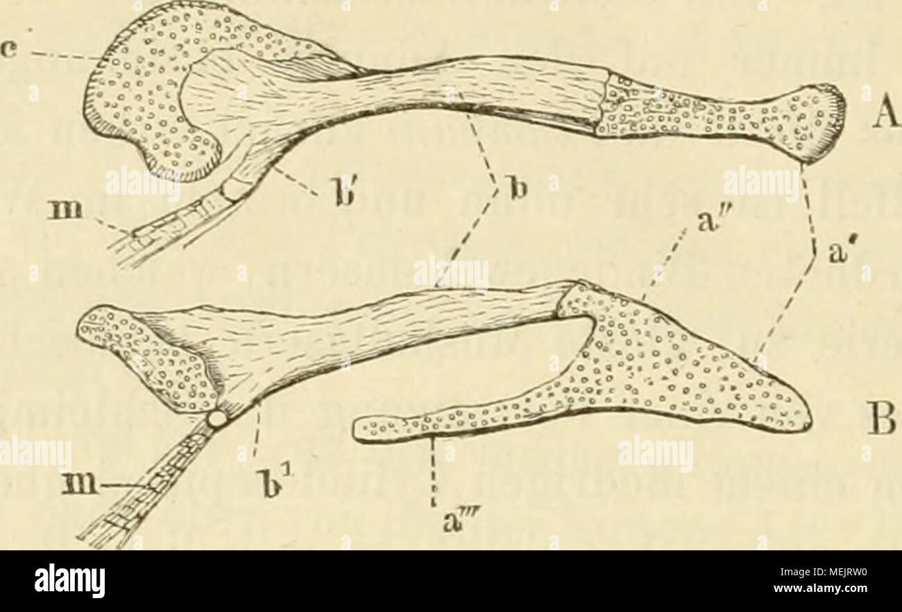 Schön Kieferanatomie Muskeln Bilder - Anatomie Ideen - finotti.info