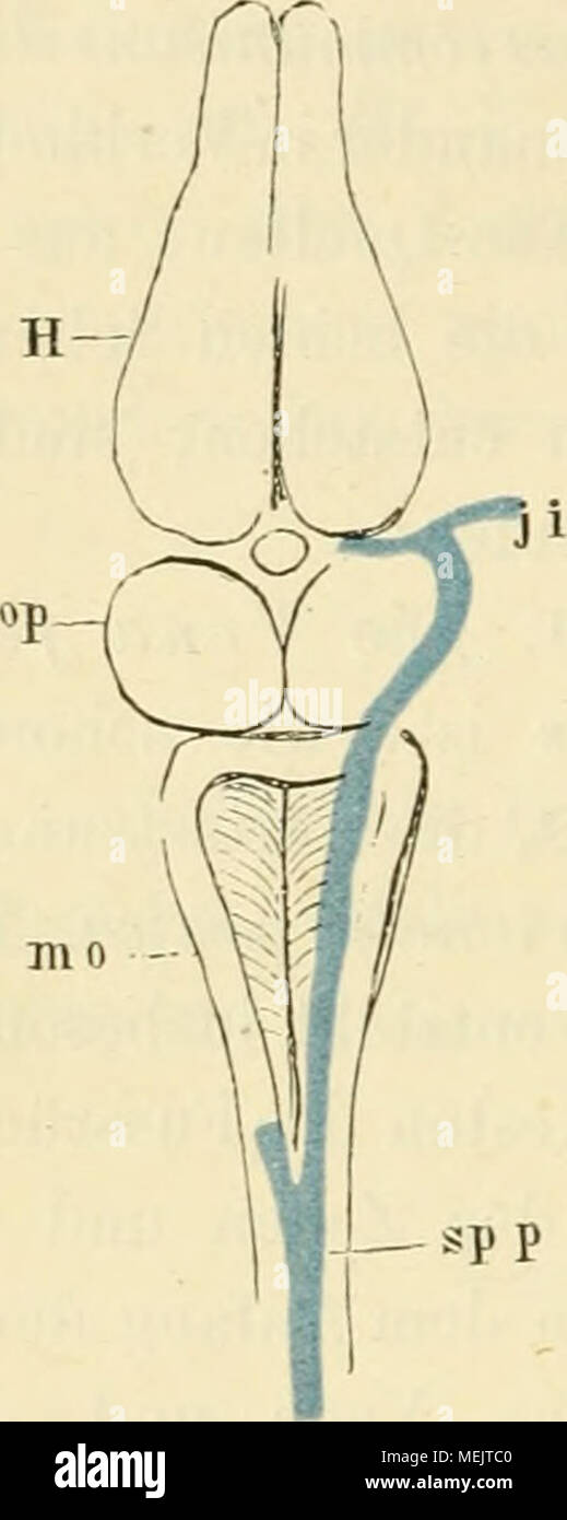 Großzügig Anatomie Der Peripheren Nerven Fotos - Menschliche ...