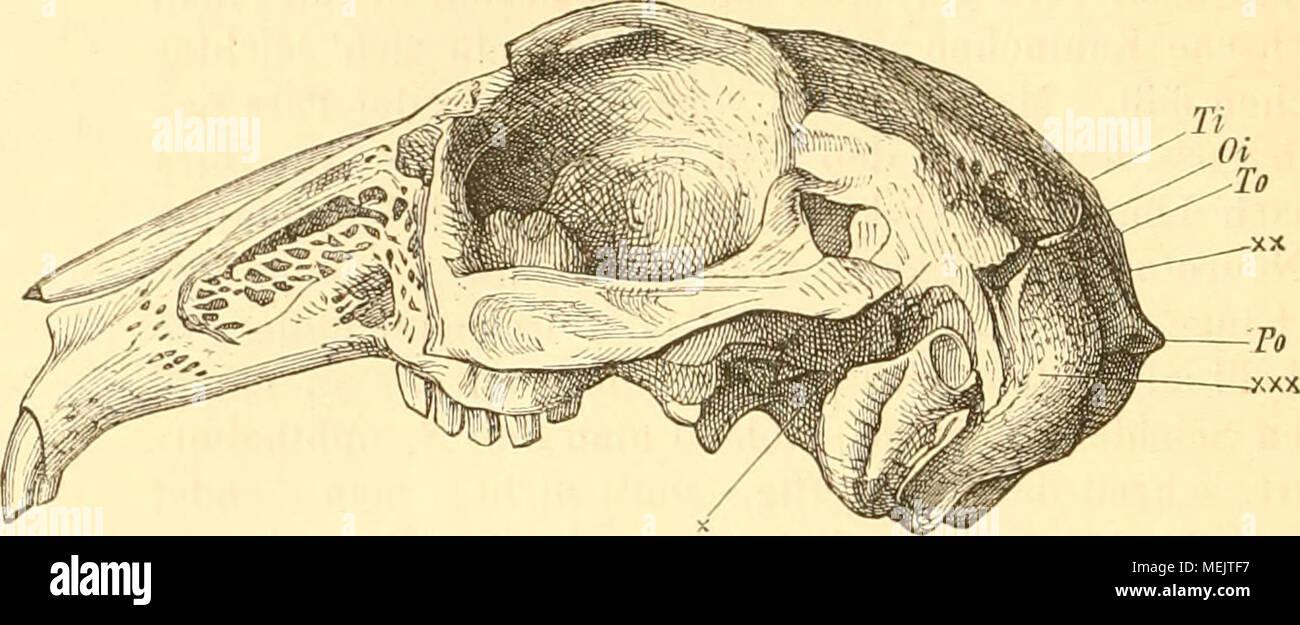 Erfreut Anatomie Und Physiologie Körperstrukturen Bilder ...