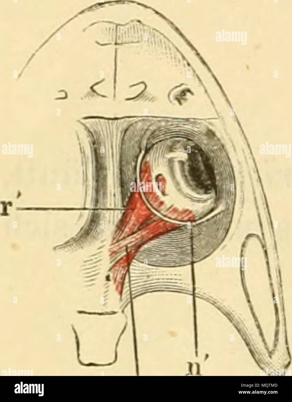 Niedlich Frosch Anatomie Gekennzeichnet Fotos - Menschliche Anatomie ...