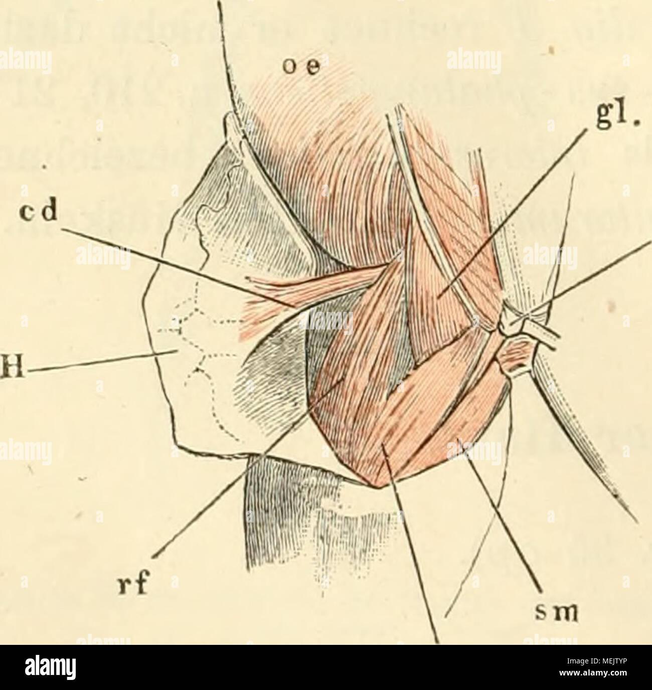 Wunderbar Itec Anatomie Und Physiologie Vergangenheit Papiere ...