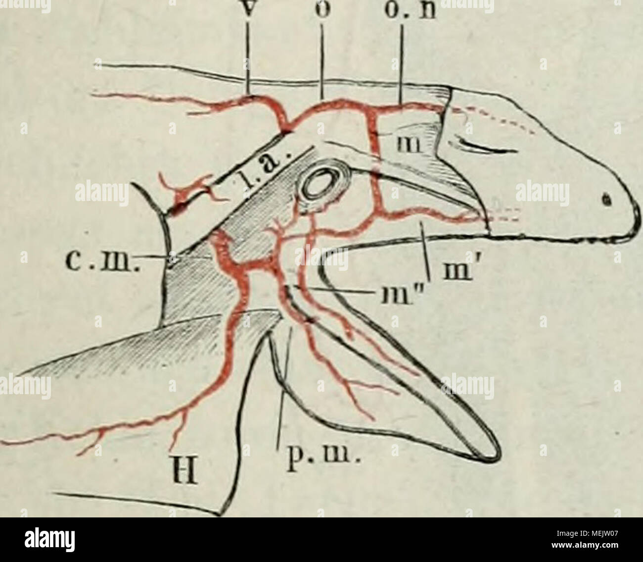 Berühmt Trommel Satz Anatomie Galerie - Menschliche Anatomie Bilder ...