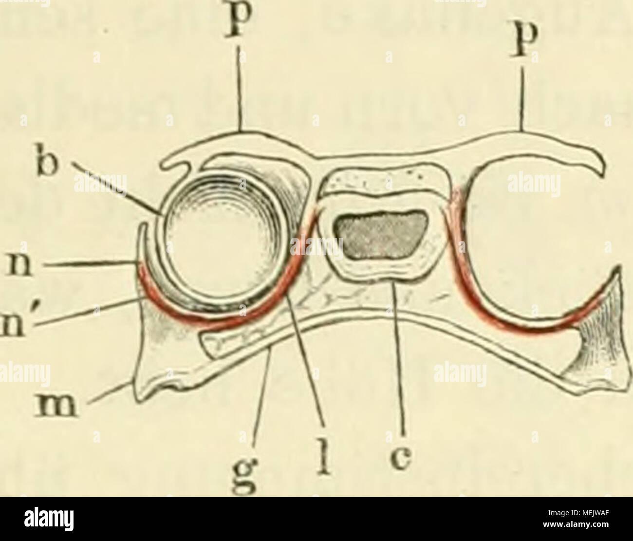 Atemberaubend Auge Anatomie Und Physiologie Animation Zeitgenössisch ...