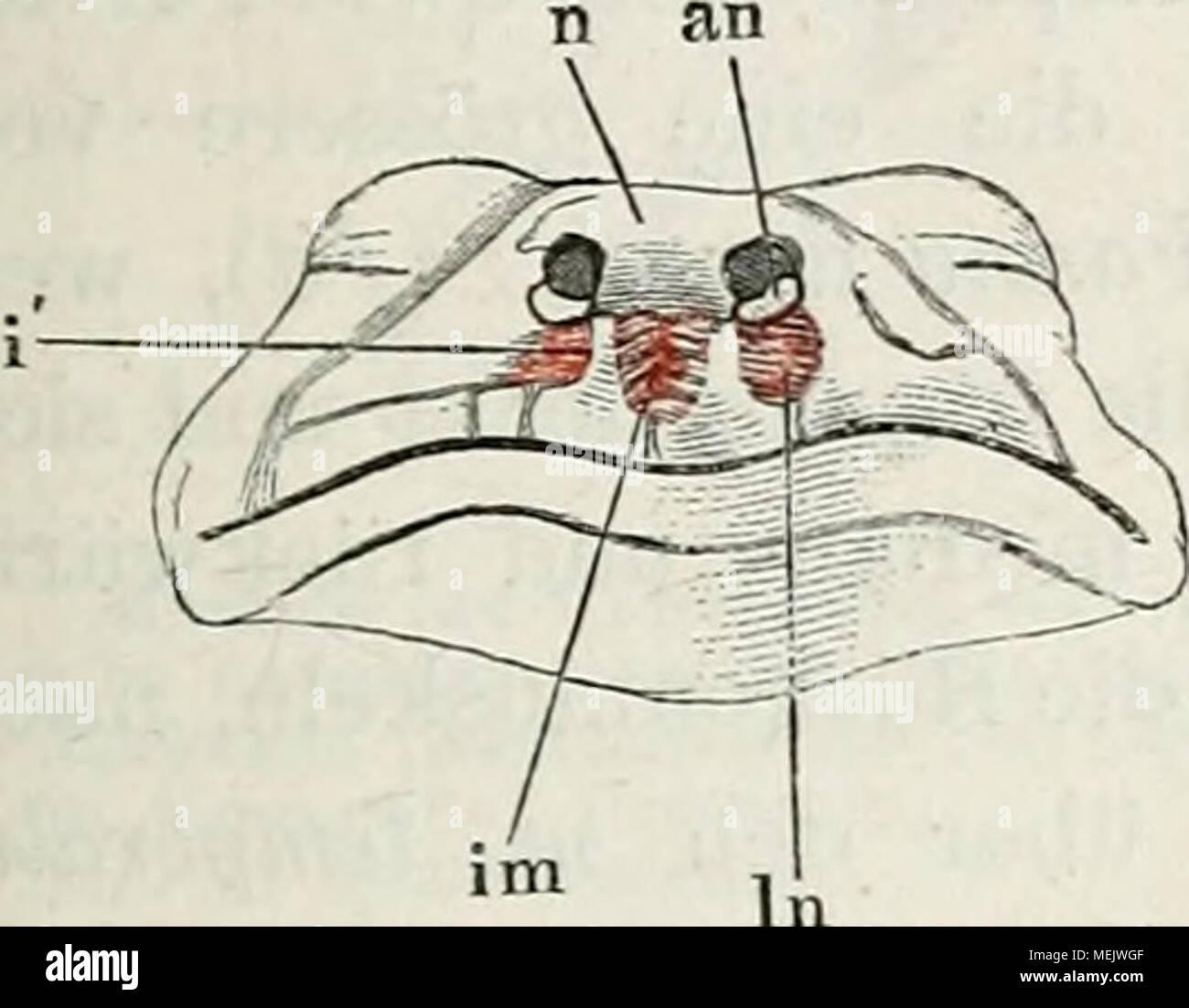 Schön Nasengang Anatomie Ideen - Menschliche Anatomie Bilder ...