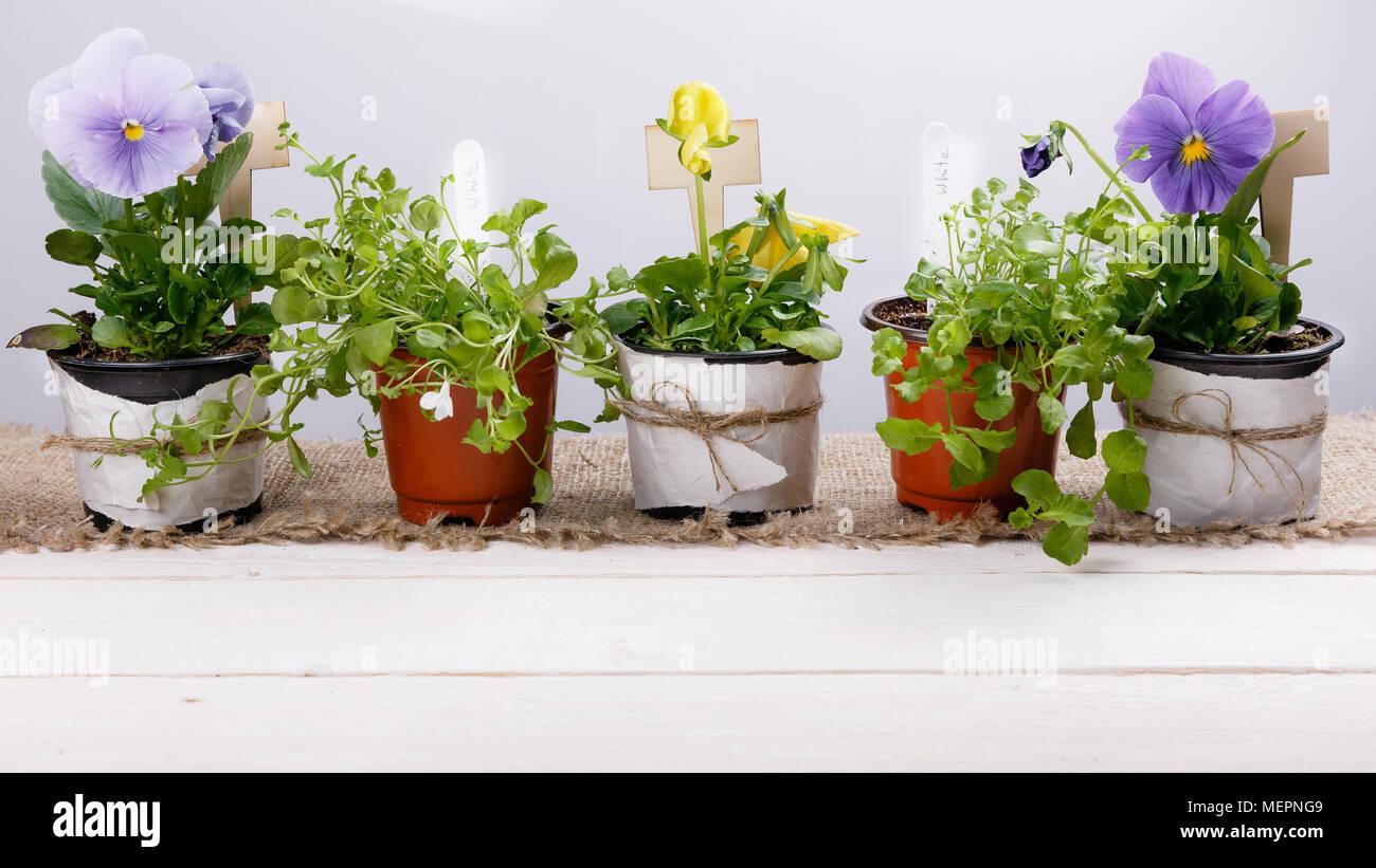 Giardinaggio E Fiori.Utensili Da Giardinaggio E Fiori Piantine Di Viola E Lobelia In