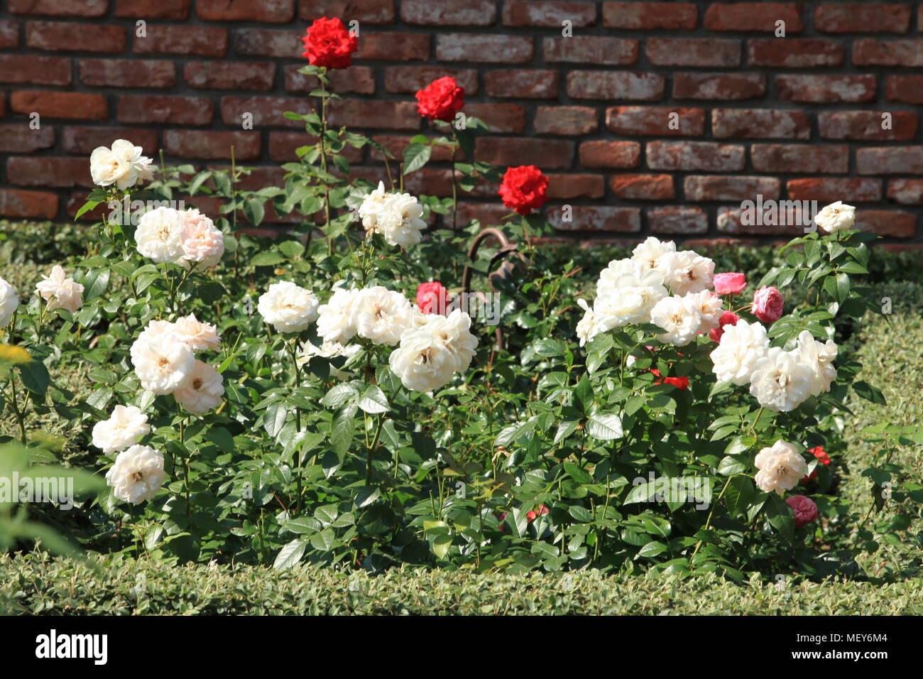 Giardini d italia i giardini più belli da visitare