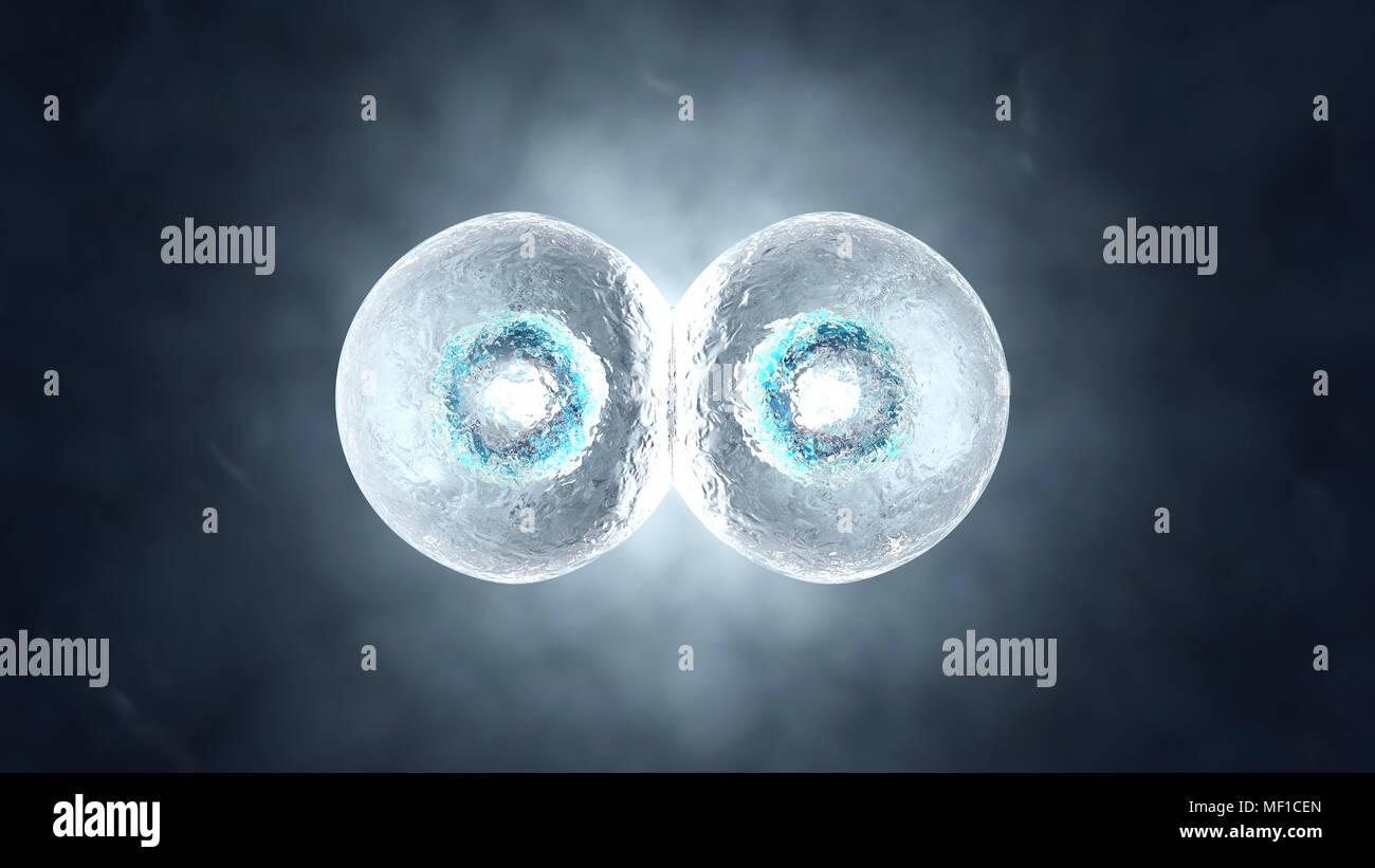 3D reso illustrazione della mitosi e la replica di una generica cella biologica. Foto Stock