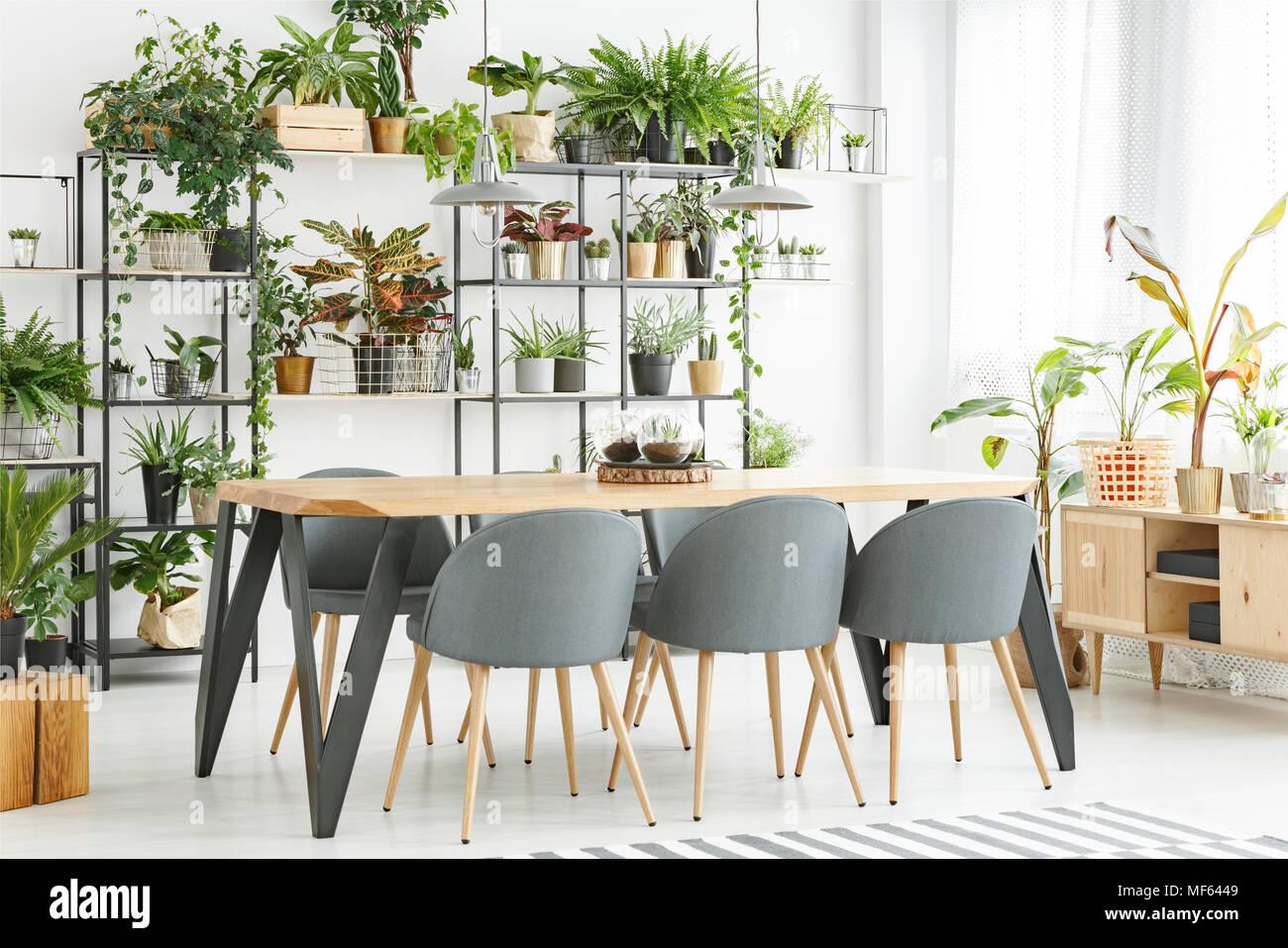 Tavoli Sala Da Pranzo In Legno : Sedie grigio al tavolo in legno naturale e in sala da pranzo interno