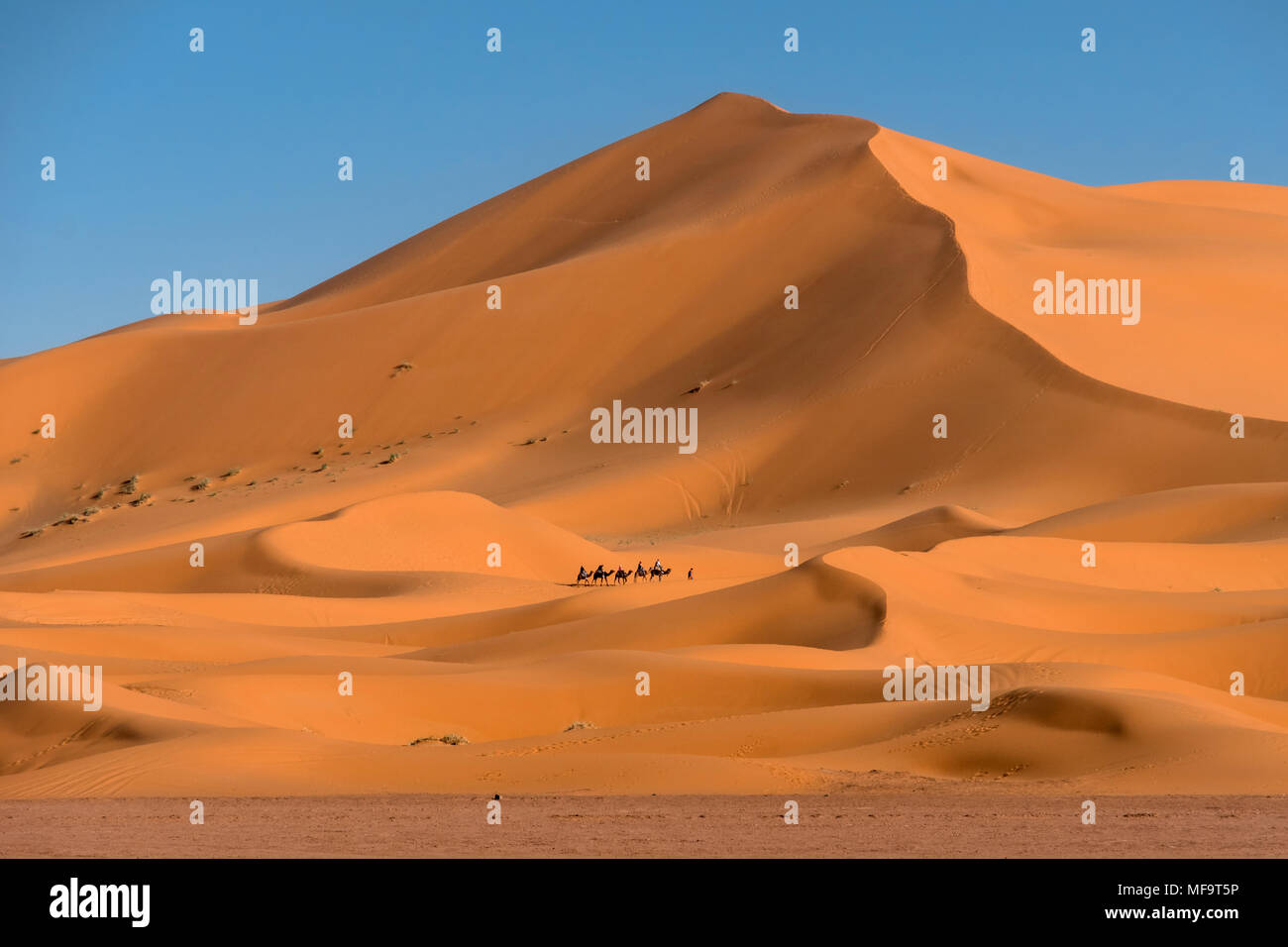 Camel Train, Erg Chebbi Desert, Sahara Occidentale, Marocco Foto Stock