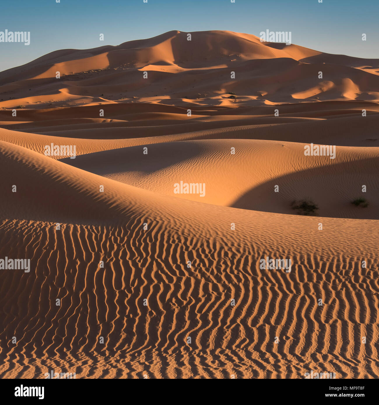 Mare di sabbia, Erg Chebbi dune del deserto, Sahara Occidentale, Marocco Foto Stock