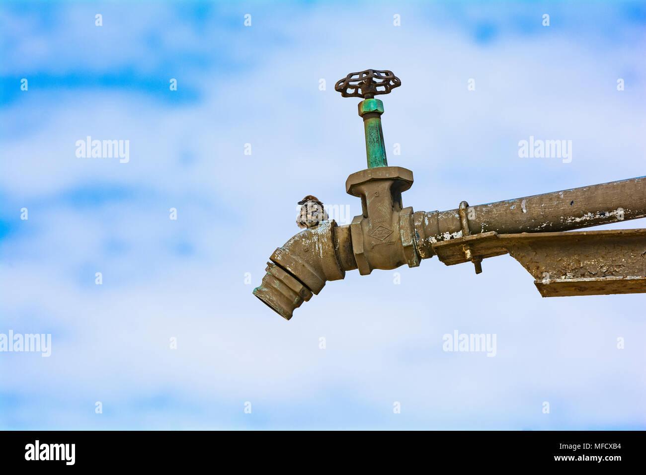 Vecchi uomini neri con enormi rubinetti