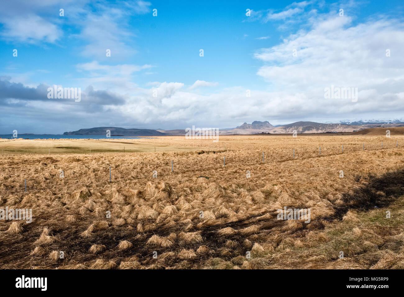 Reynisfjara, Sud dell'Islanda. Terreni agricoli vicino alla famosa spiaggia Immagini Stock