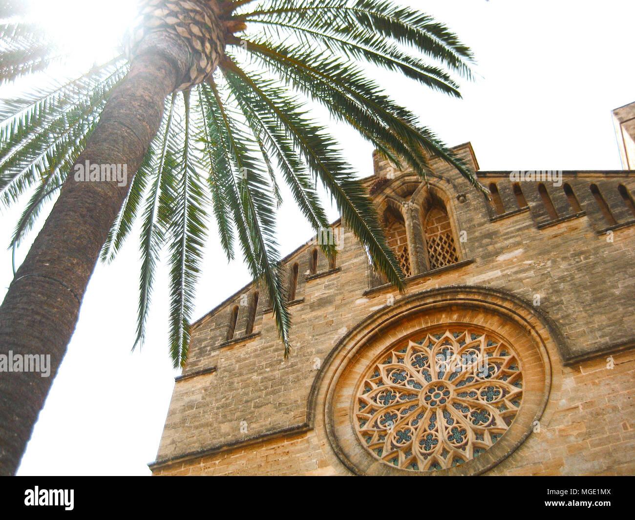 Green Palm tree vicino alla casa di pietra di Spagna Palma de Mallorca. Alberi e vecchi edifici di Palma Foto Stock