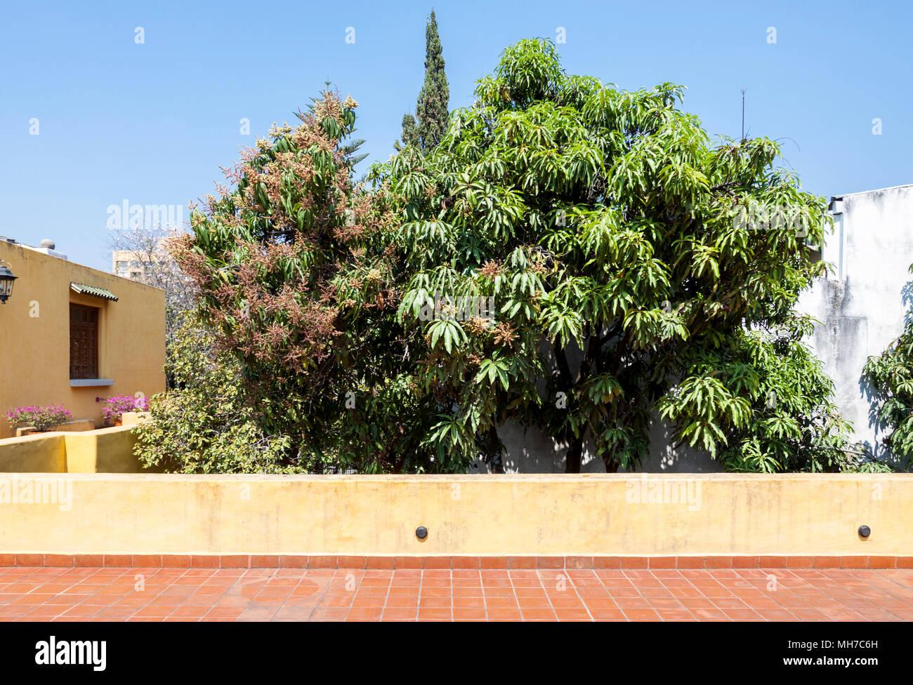 Terrazza arredata con piante tropicali. Guadalajara, Jalisco Messico ...