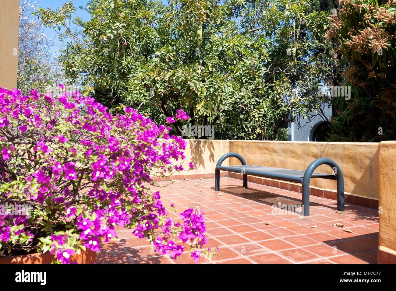 Terrazza Arredata Con Piante Tropicali Guadalajara Jalisco Messico Foto Stock Alamy