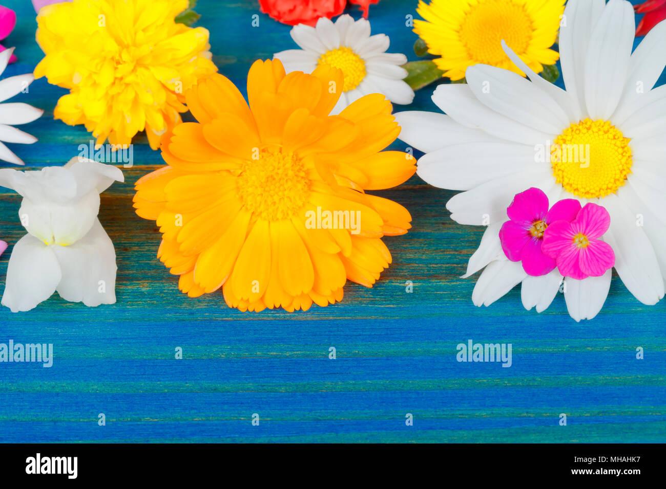 Diversi Fiori Su Sfondo Blu Foto Immagine Stock 182786219 Alamy