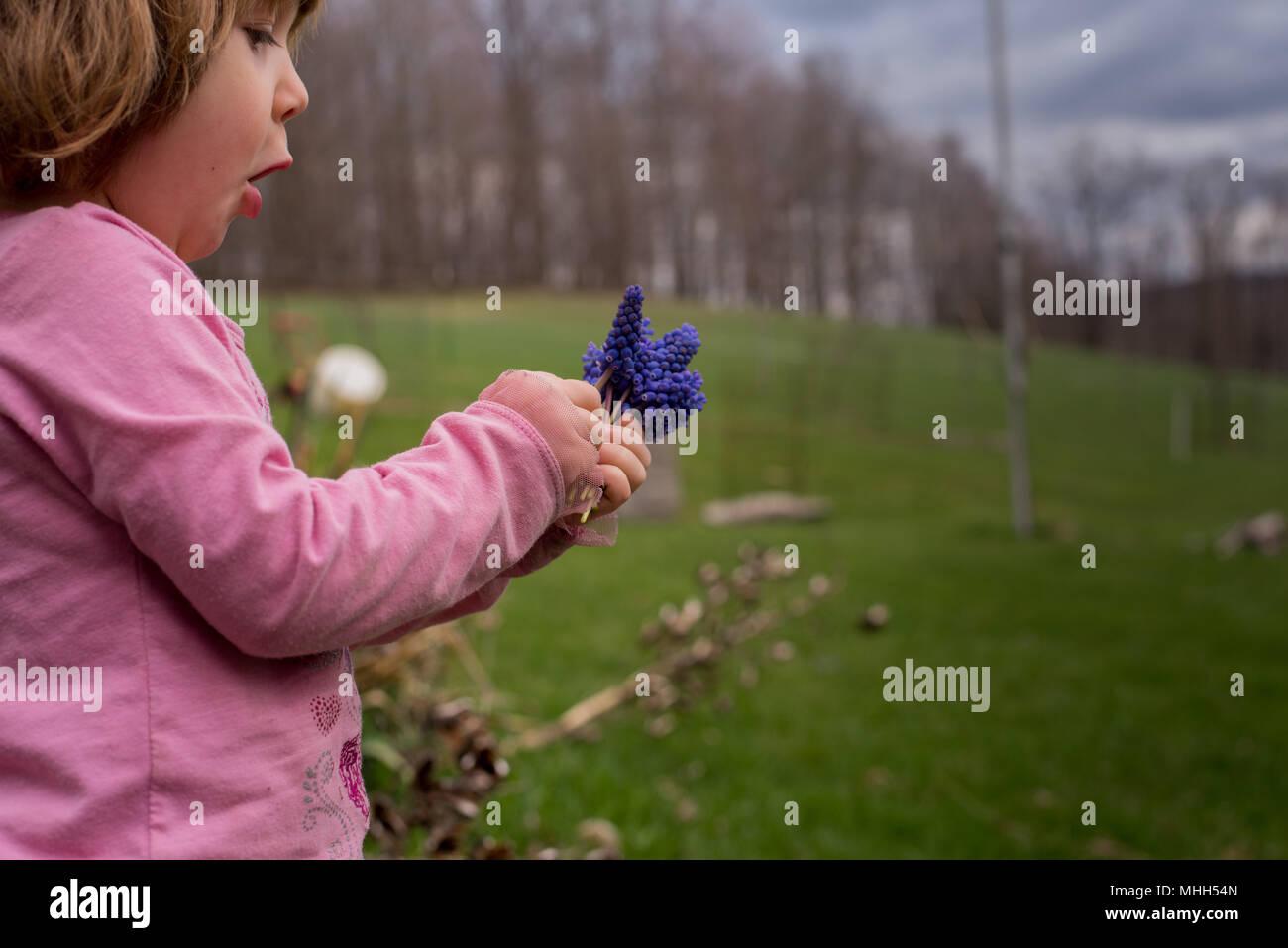 Una bambina tiene un bouquet di giacinti viola i fiori in primavera. Immagini Stock