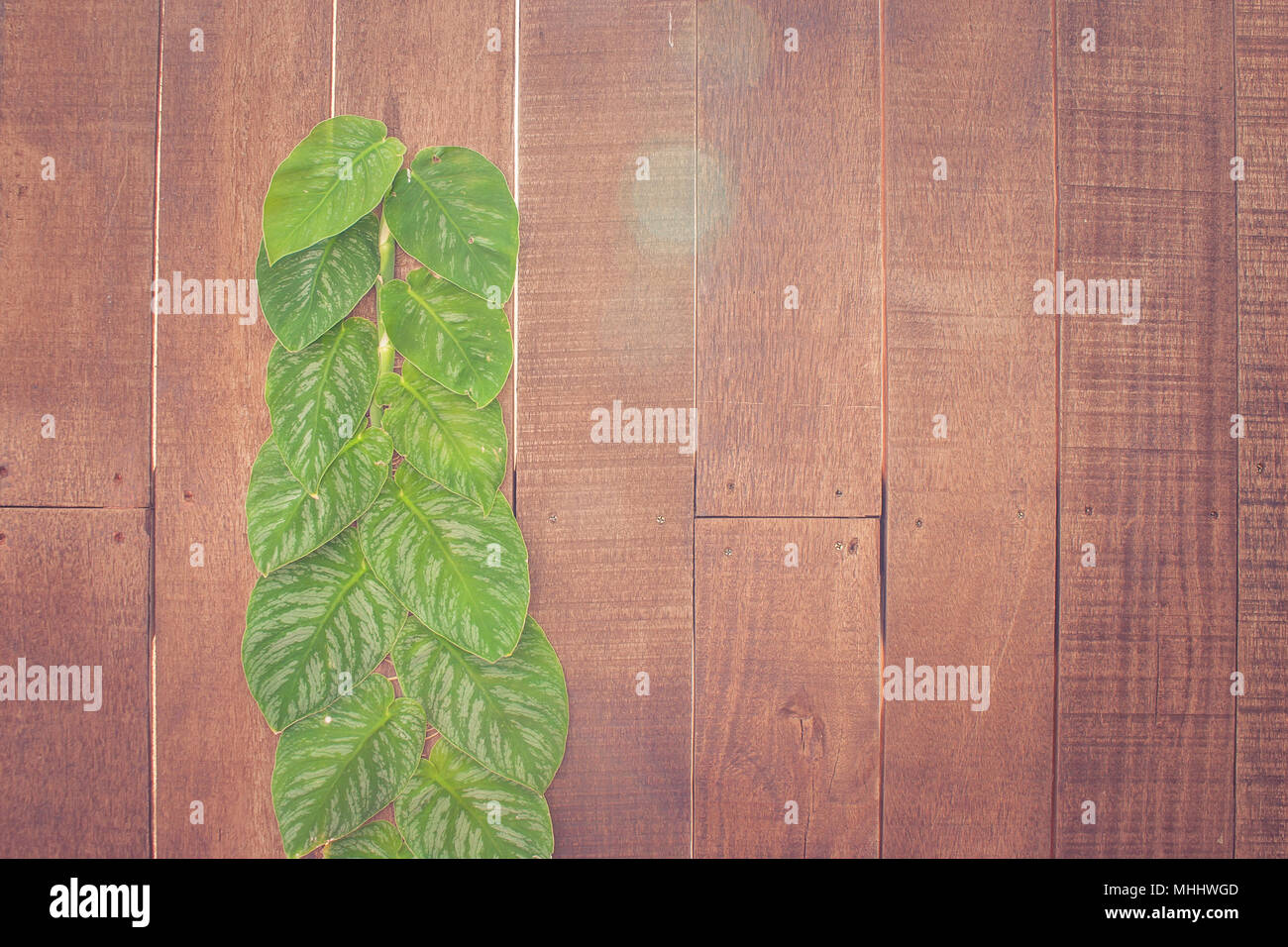 Decorazioni In Legno Per Pareti : Verde la crescita di edera sulla parete di legno per giardino