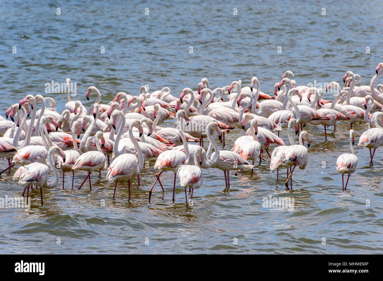 Flamingo nell'oceano Immagini Stock