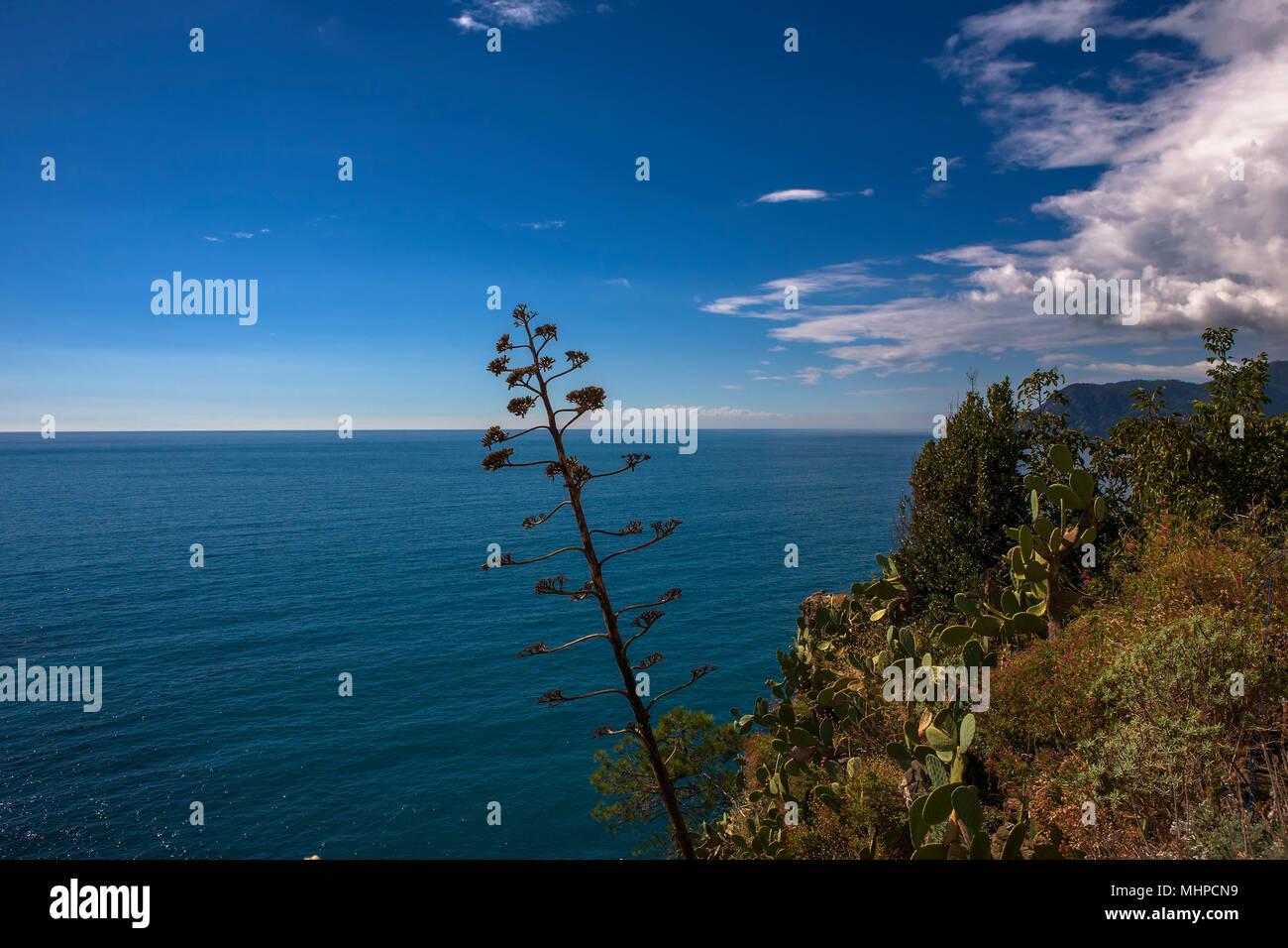 La costa delle Cinque Terre guardando a nord dalla terrazza di Santa ...