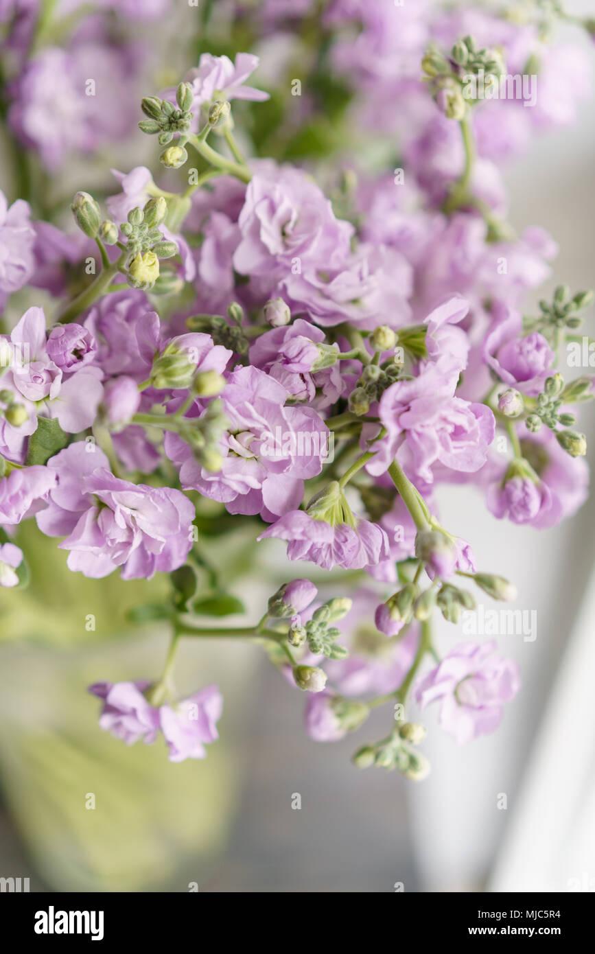 Fiori Di Colore Lilla.Bouquet Di Bellissimo Colore Lilla Gillyflower Levkoy Mattiola O