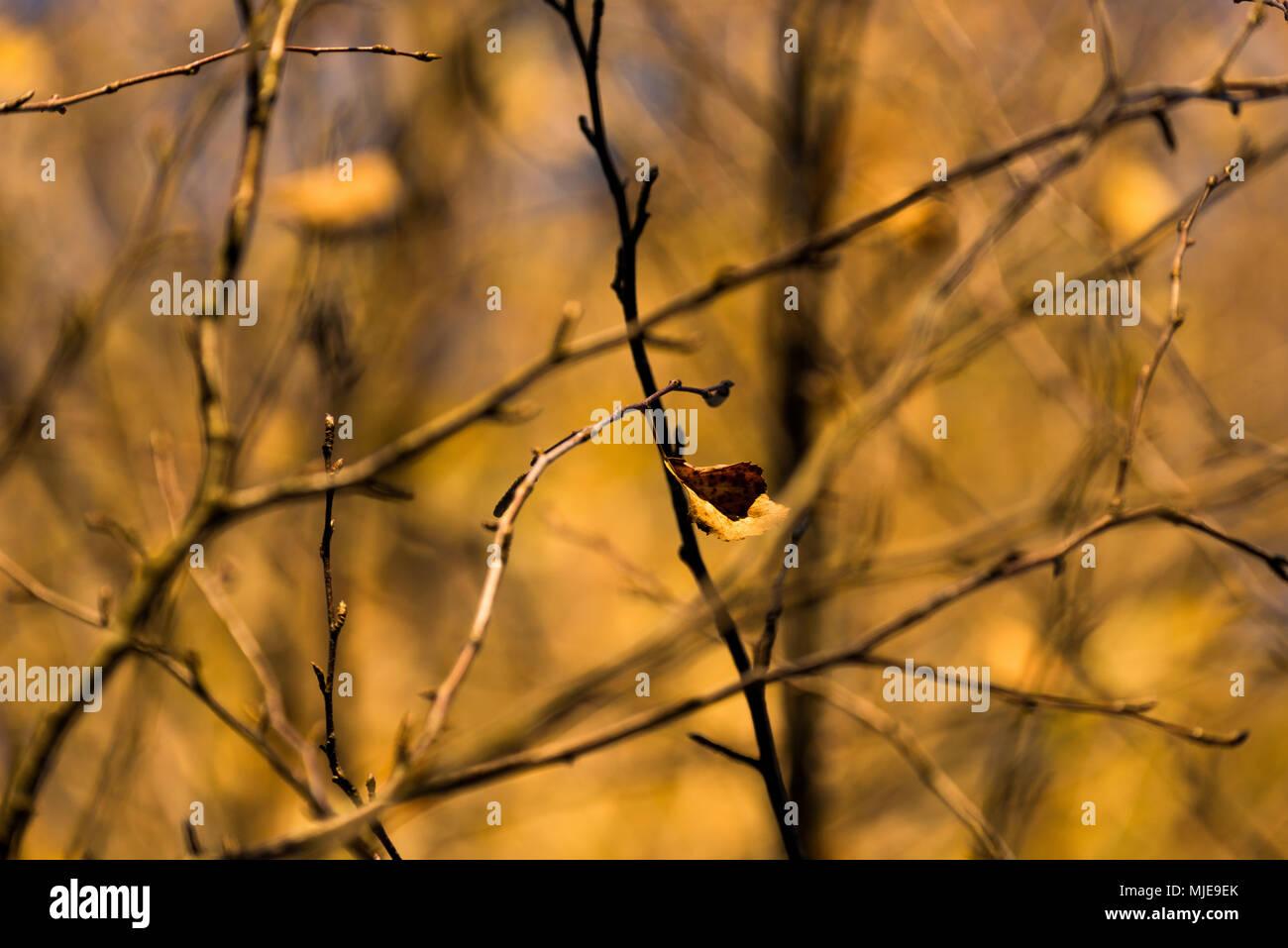Autunno umore sul lago, albero, rami, close-up Immagini Stock